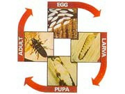 woodworm causes