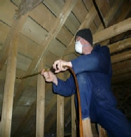 treatment of woodworm